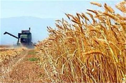 سخنگوی کمیسیون کشاورزی درگفتگو با خبرفوری:دولت ۳۰۰۰ میلیارد تومان مطالبات گندمکاران را پرداخت کند