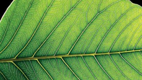فتوسنتز گیاهان به بیماران سکته قلبی کمک میکند