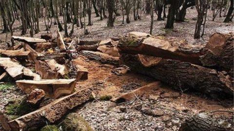 بهرهبرداری از جنگلهای شمال از سال آینده ممنوع میشود