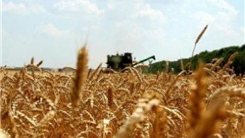واردات گندم به کشور کماکان ممنوع است