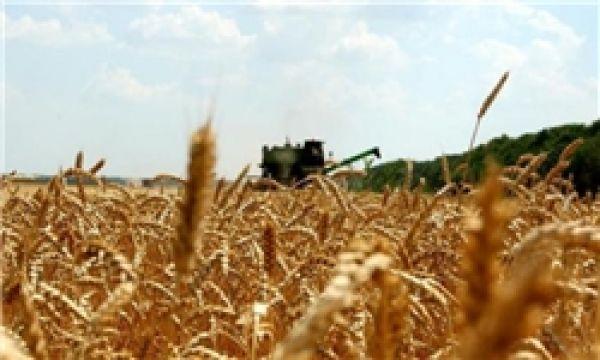 واردات-گندم-به-کشور-کماکان-ممنوع-است