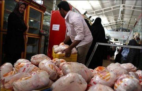 مرغ گران میشود؟