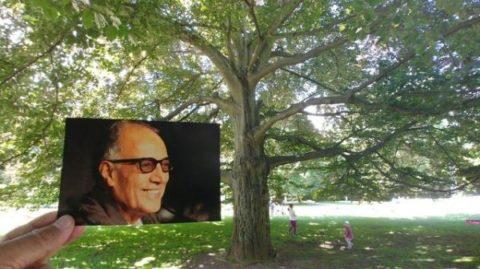 درختی که عباس کیارستمی نام گرفت/عکس