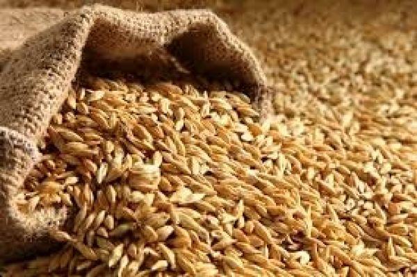 واردات-قطعی-گندم-به-کشور-ممنوع-است