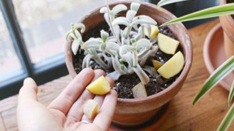 راههای از بین بردن پشه گلدان