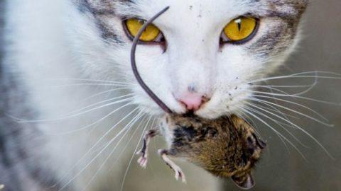 مرگ موش غیر سمی تولید شد