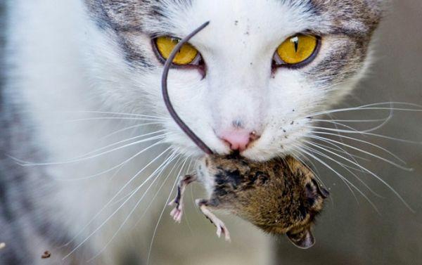 مرگ-موش-غیر-سمی-تولید-شد