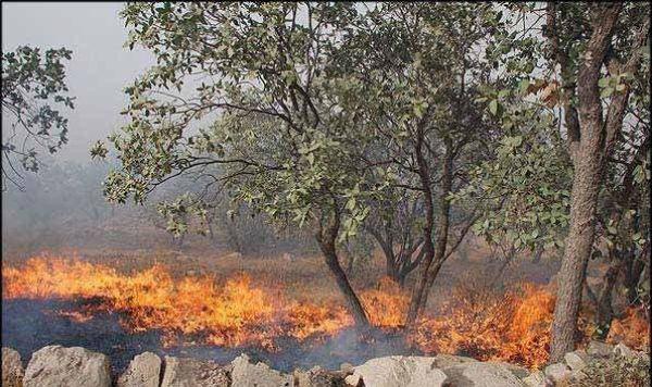 دستگیری-چهار-متخلف-آتشسوزی-در-کوهدشت