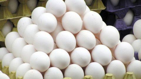 تخم مرغ اندکی ارزان شد