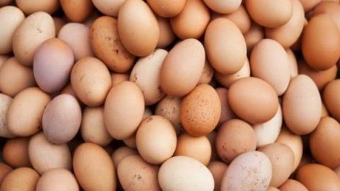 تخم مرغ گران تر می شود