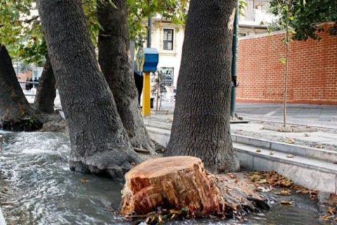 """مشکل """"چنارهای ولیعصر"""" سرطان نیست/ رییس جمهور سهشنبه درخت میکارد/ کارناوال ۸ روزه درخت کاری پایتخت"""